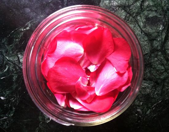 Rose petals in jar for rose elixir