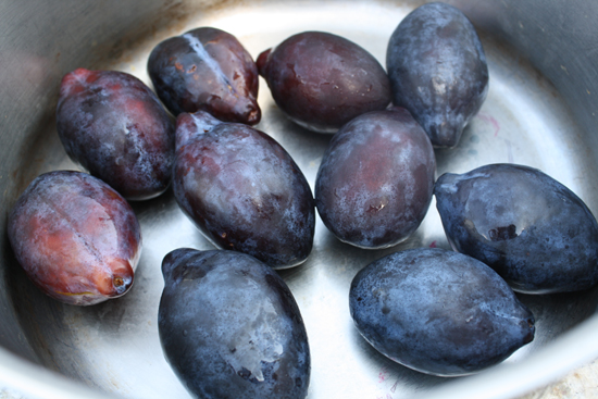 local Italian prune plums