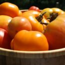 tomatoes for slow roasted tomatoes | Healthy Green Kitchen