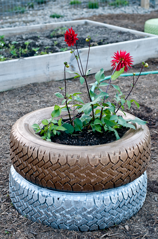 recycled tire planter photo