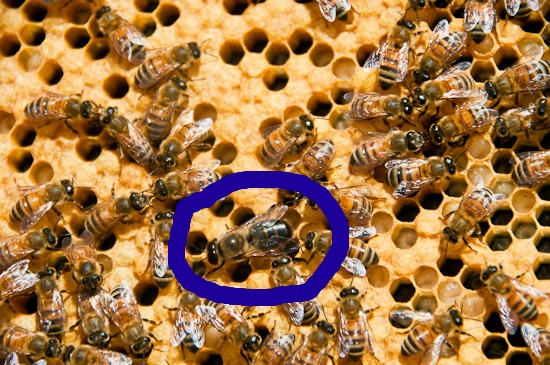 The One Bee Box You See Is Called A Deep Hive Body Or Super Its Got 10 Frames Five From Nuc Plus 5 Additional