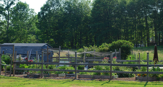 photo of organic kitchen garden