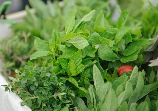 herbs_