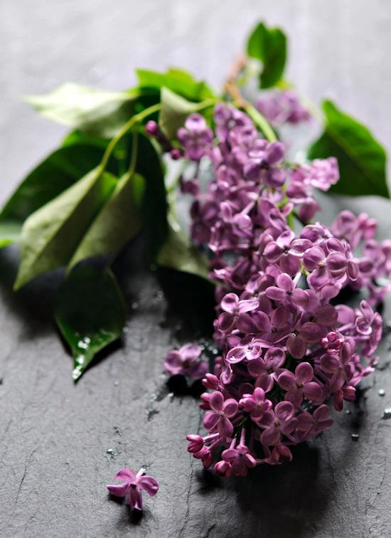 Lilacs from www.healthygreenkitchen.com