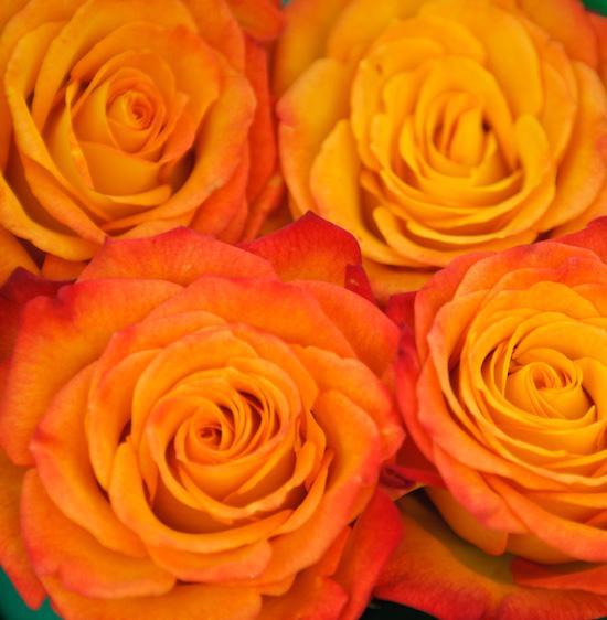 orange flowers_