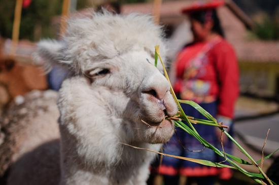 alpaca | Healthy Green Kitchen