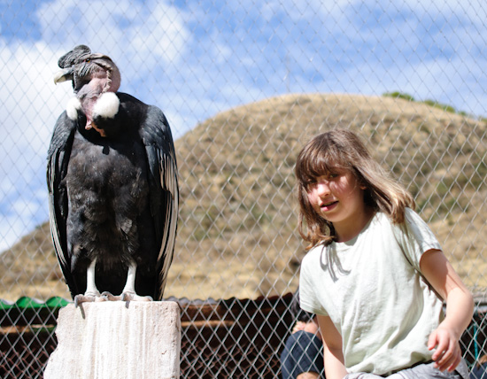 maddie and condor