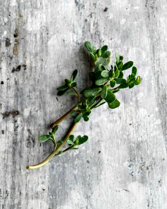 Pickled Purslane | Healthy Green Kitchen