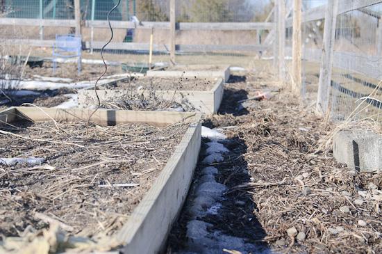march garden 1