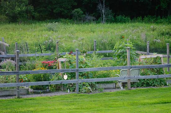 evening garden   healthy green kitchen