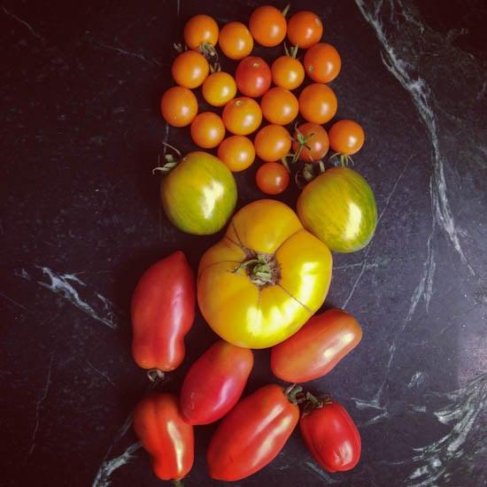 mixed tomatoes 1