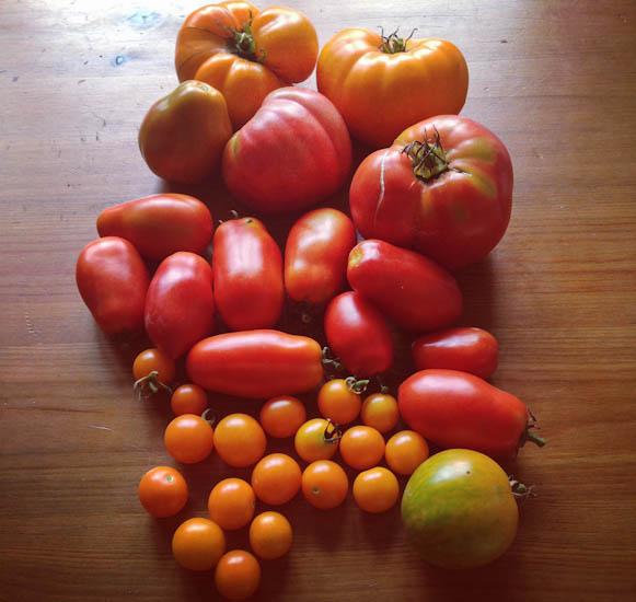 mixed tomatoes 2