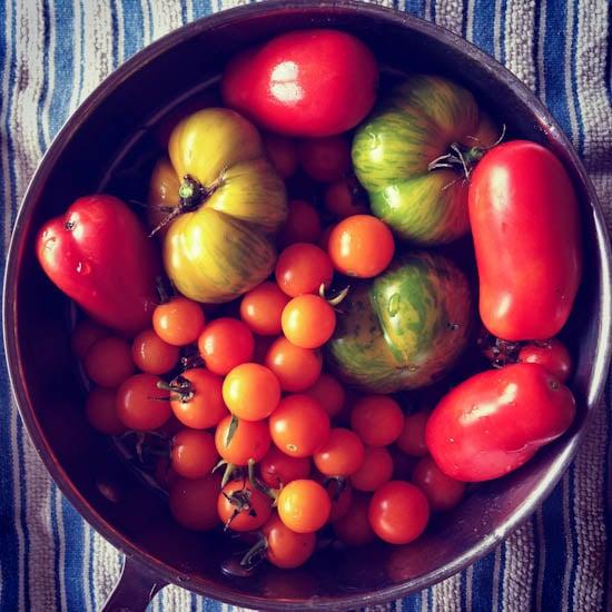 mixed tomatoes 4