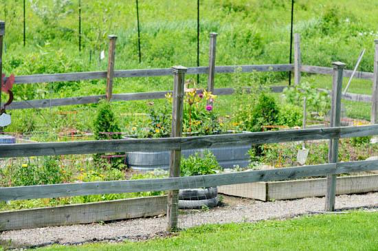 winnie abramson garden